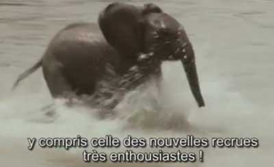 Canadian French subtitles for training film