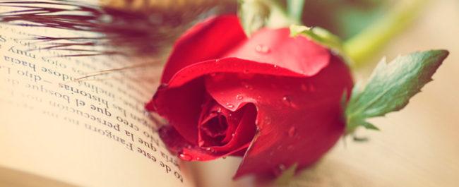 Flower in book - Catalan holiday, Sant Jordi Localisation